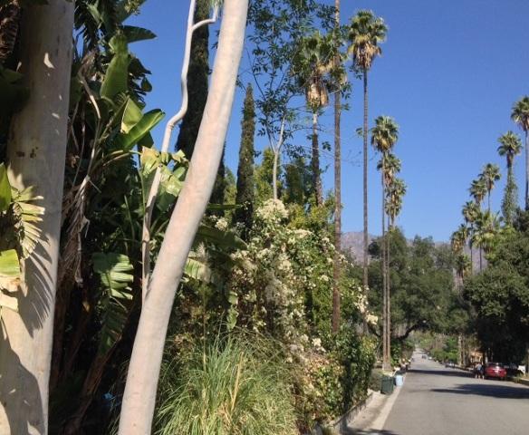Glendora foliage
